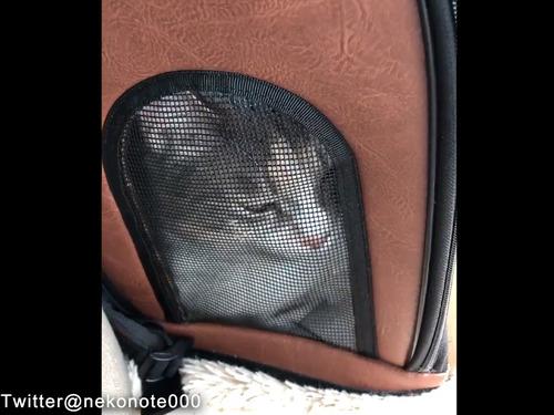 病院に連れていかれる猫00