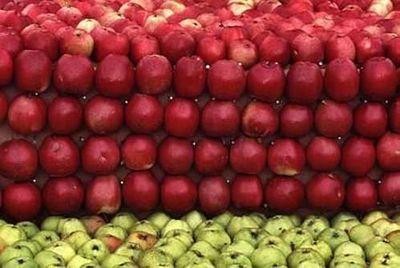 天然色で彩った巨大なりんごアート06
