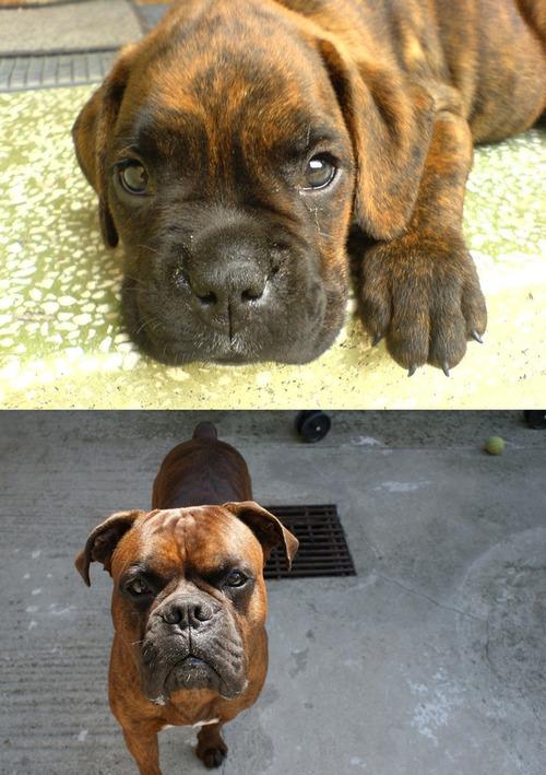 犬の成長12