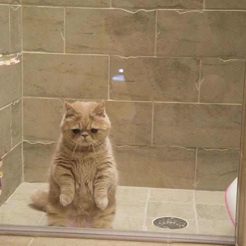自分を人間だと思ってる猫06