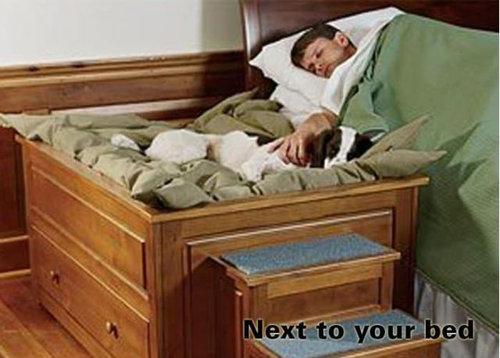 犬の寝場所04