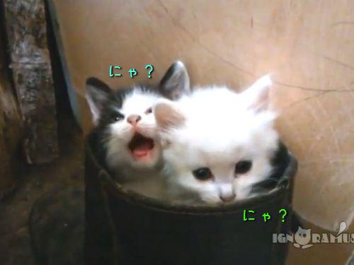 子猫2匹がブーツの中に入ると00