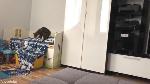 毛布泥棒の犯人01