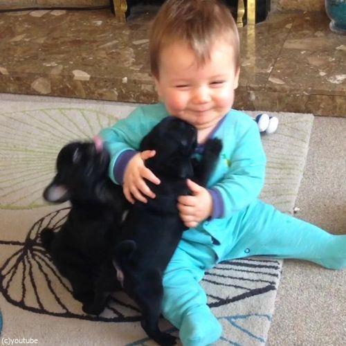 赤ちゃんとパグ05
