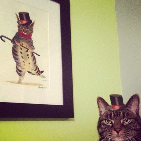 猫の不満顔04