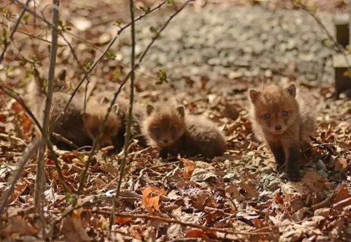 02Baby 赤ちゃん動物たち