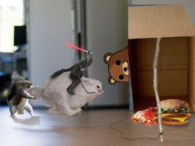 走る猫04