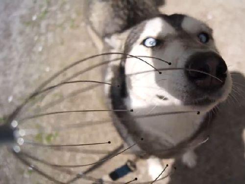 ヘッドマッサージが好きな犬01