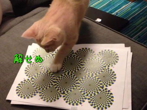 猫と目の錯覚00