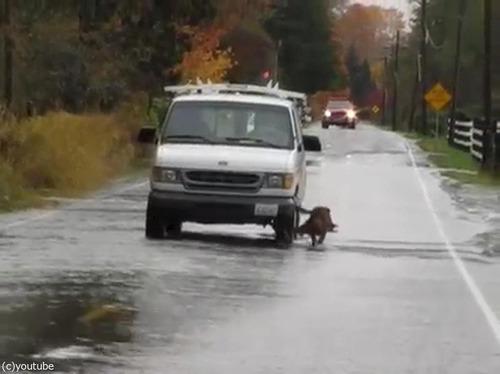 道路で犬が魚釣り01