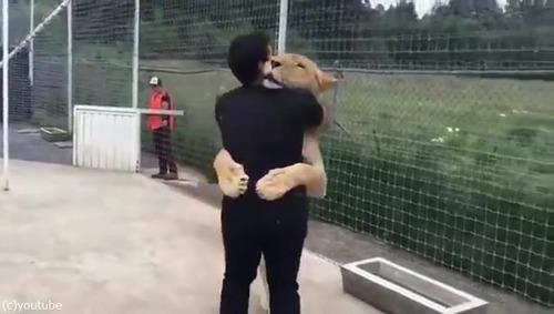 飼育員さんに再会したライオンの反応02