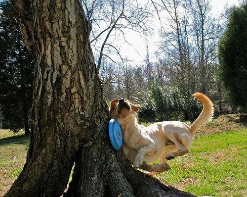 犬がフリスビーをキャッチ01