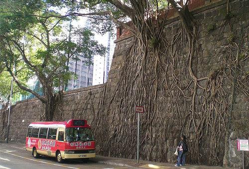 木の生命力13