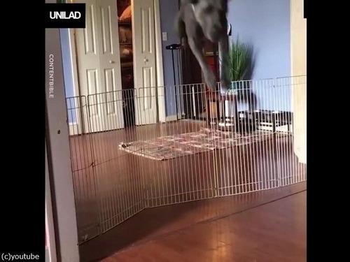 「犬の柵で一番効果的なのは」00