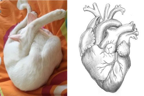 猫が心臓そっくりに01