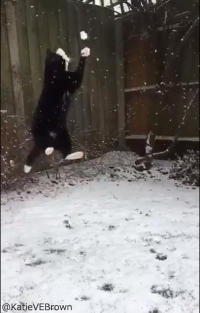 雪をキャッチするにゃんこ03