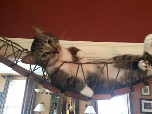 猫と吊り橋09