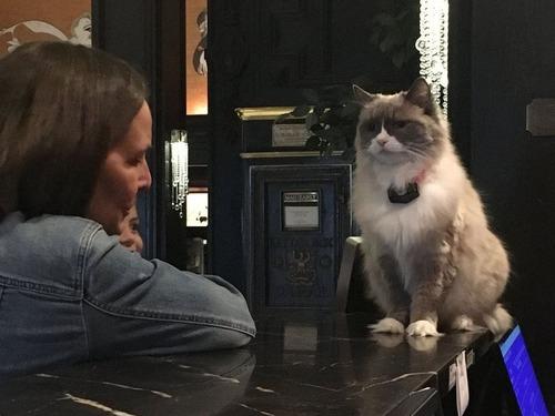ホテルに勤続7年の猫が引退08