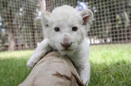 動物の赤ちゃん45