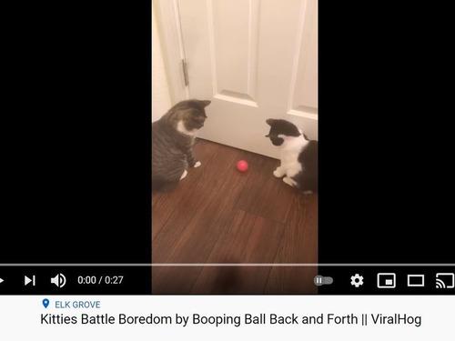 猫2匹が謎の球技