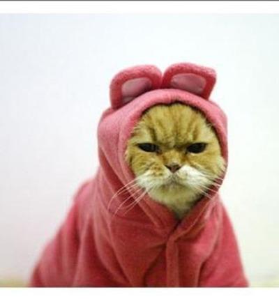 猫コスプレ14