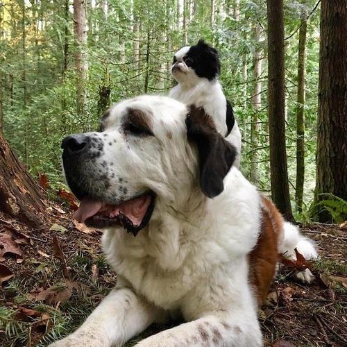 親友を背中に乗せる犬05