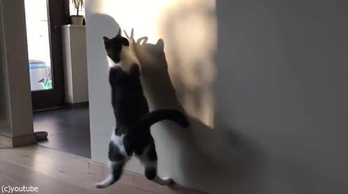 猫VS影絵01