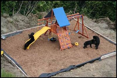 庭に遊び場を作ったら…クマさんが…喜んで遊んでた04