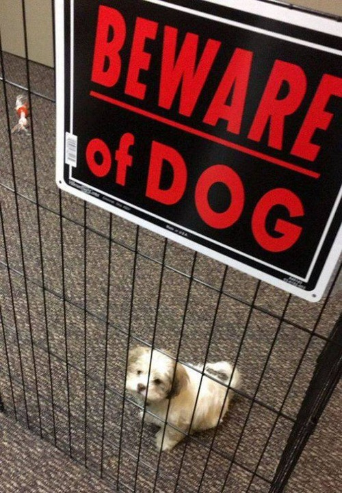 猛犬注意…と思ったら違う例06