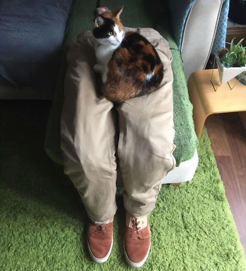 猫用のフェイクのヒザ04
