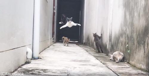 この猫の躍動感よ04