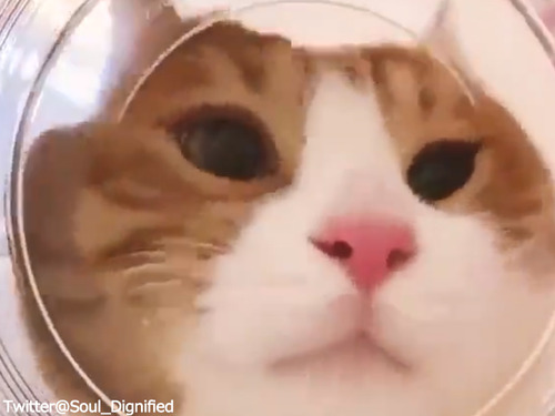 金魚鉢の金魚の気分00