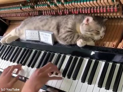 ご主人のそばに居たい猫…こんな場所でも昼寝00