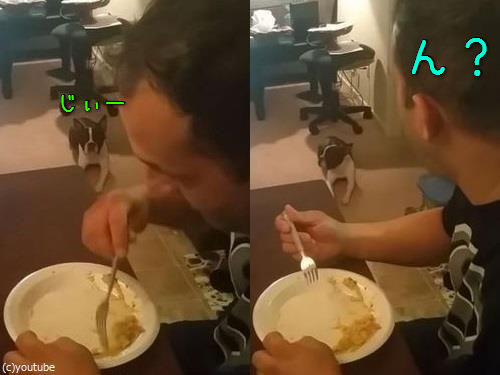 犬の視線00