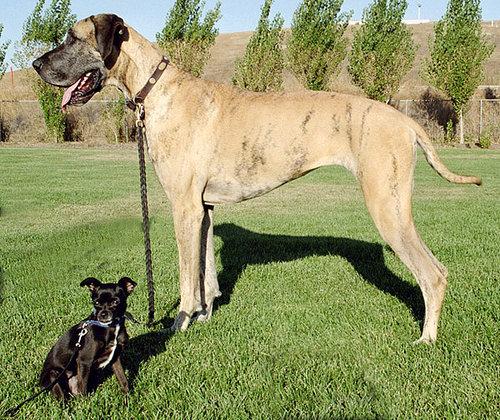 大きな犬のトラブル06