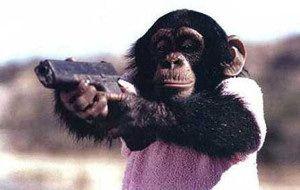 チンパンジー04