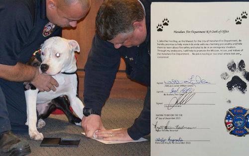 火災から救出された子犬、消防士に08