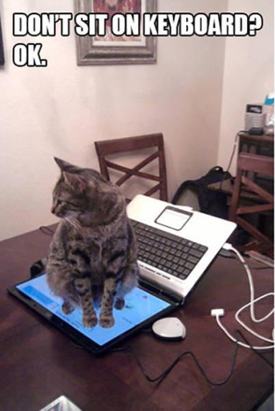 おかしな猫たち13