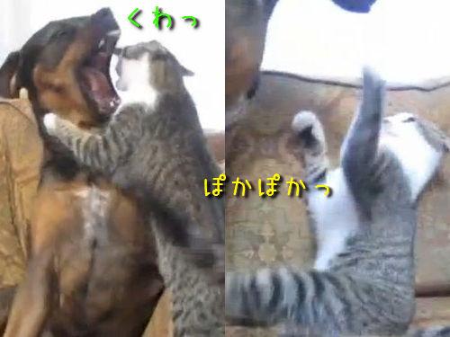 仲良くケンカする犬と猫
