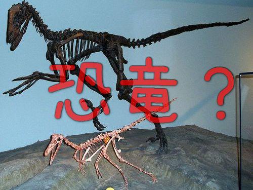 鳥が恐竜の子孫だと実感した00
