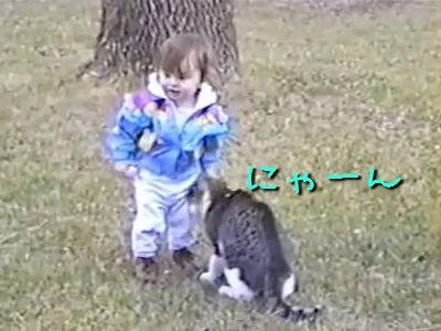 愛してやまない猫