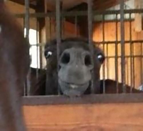 馬には2タイプある02