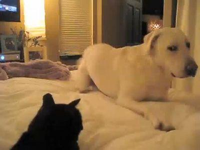 犬「ここは俺のベッドだもんね」猫「認めぬ」