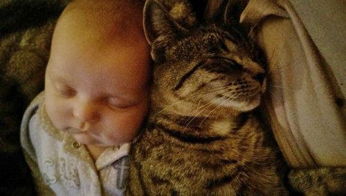 妊娠中に拾った猫が、今は赤ちゃんと親友に13