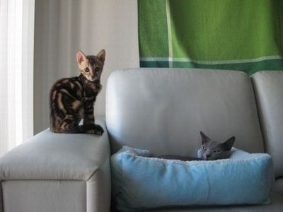猫の場所取り01