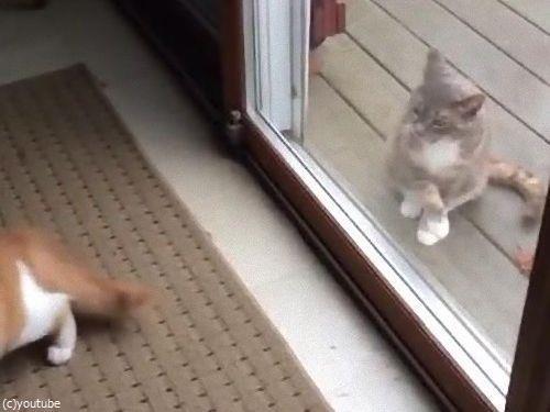 ハイテンションの猫と冷静な猫07