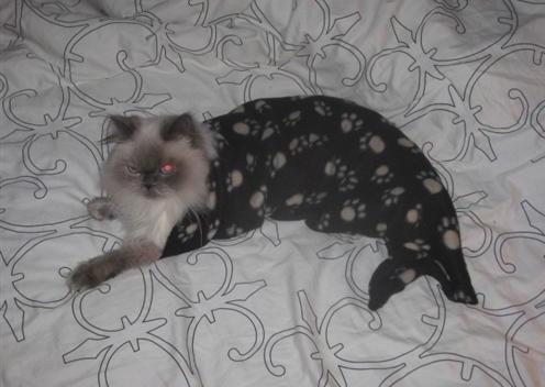 人魚猫06