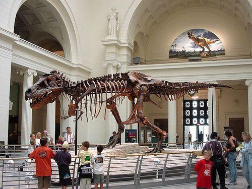 古生物学者で恐竜の研究をしている00