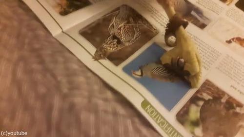 ペットに雑誌をあたえてみた03