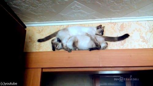 猫が正面衝突するかと思いきや03